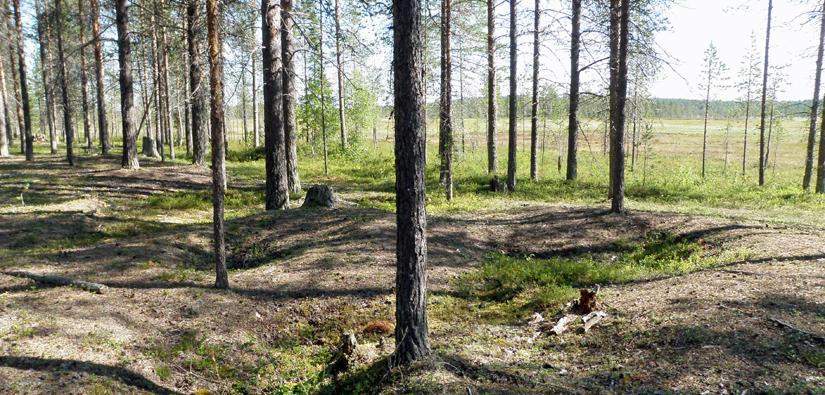 Tällä paikalla Rovaniemen Pirttivaarassa on asuttu jo noin 9 400 sitten. Kuva: Taisto Karjalainen/Metsähallitus.
