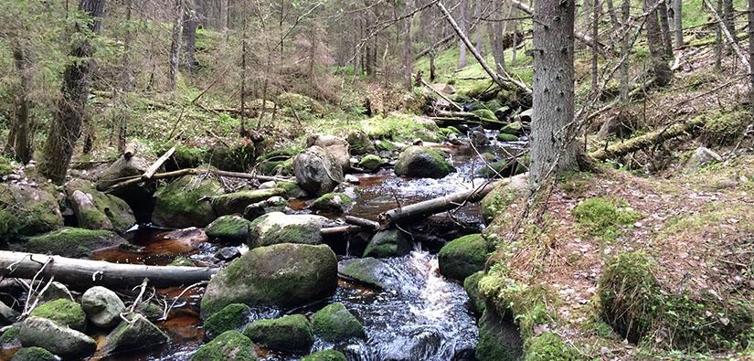 Metsän keskellä virtaavassa purossa on paljon erikokoisia kiviä ja lohkareita ja siihen on kaatunut myös puita.