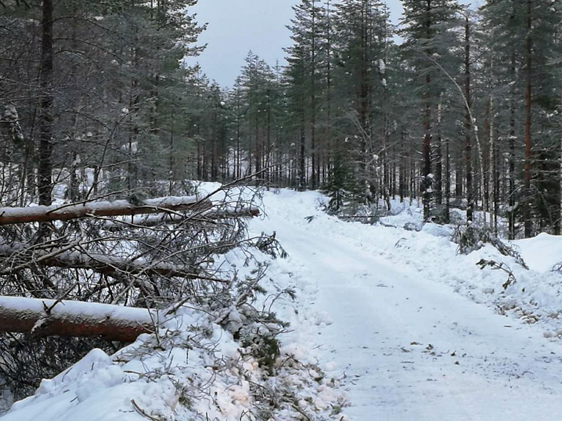 """Tielle kaatuneet puut muodostaneet """"tietullin"""", joka pitää maksaa puut katkomalla. (kuva: JarmoLaatikainen)"""
