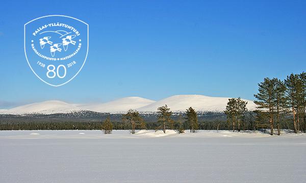 Pallas–Yllästunturin kansallispuisto on 80-vuotias. Kuva: Maarit Kyöstilä.