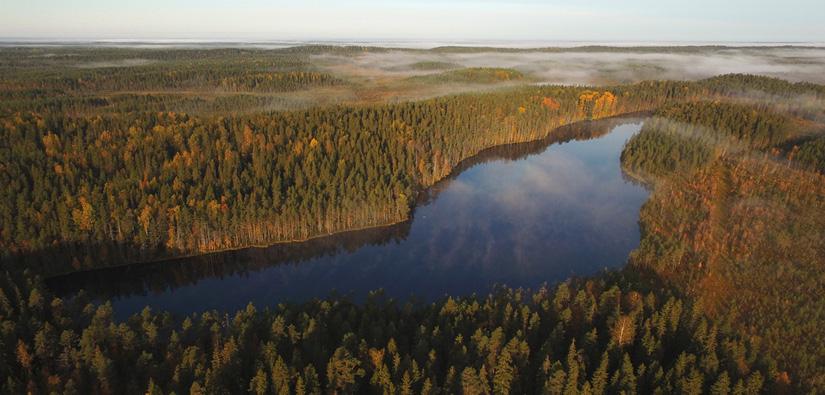 Pitkäjärvi, Ylöjärvi. Bild: Jari Salonen