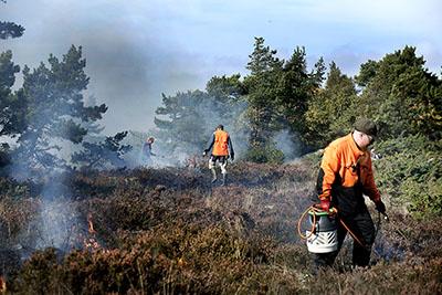 Tulen käyttö auttaa paahdetta tarvitsevia lajeja Örön saarella Saaristomeren kansallispuistossa. Kuva: Liisa Huima.
