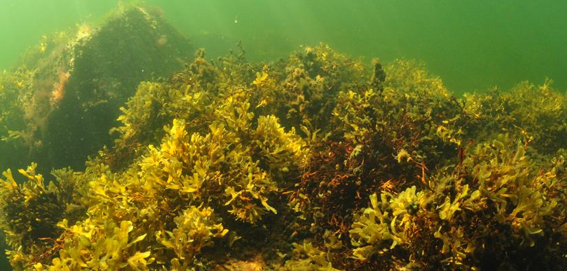 Bottenhavet (Bild: Heidi Arponen)