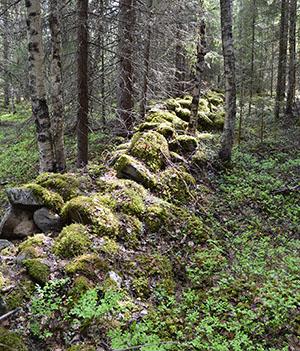 Vanhan asuintilan raunioita valtionmetsissä. Kuva: Metsähallitus.