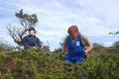 WWF:n vapaaehtoisia Paahde-LIFE-hankkeen talkoissa Isonkarin saarella Selkämeren kansallispuistossa 2018. Kuva: Lotte Suveri / WWF.