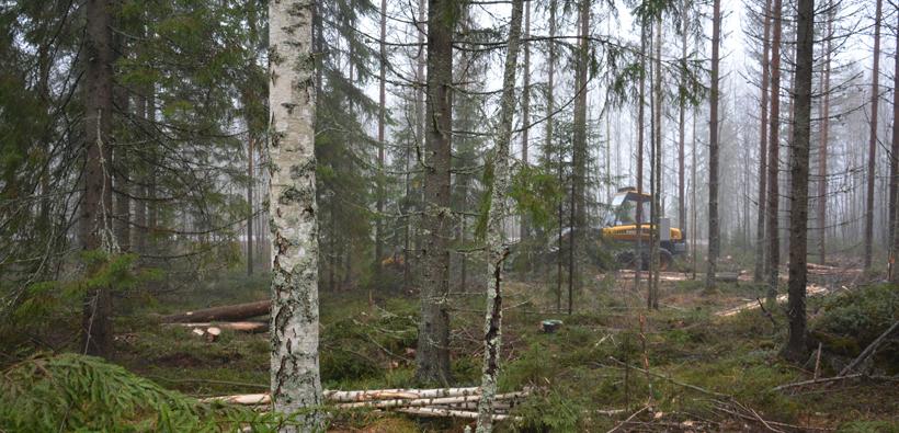 Metsätalous vastaa ilmastohaasteeseen (Kuva: Keijo Kallunki)