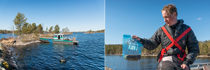 Kaksi valokuvaa. Toisessa on vene ja sukeltaja rantavedessä. Toisessa kuvassa sukeltaja pitää muovipussia, jossa on istukka.