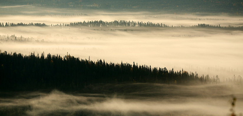 Morning in Syöte area. Photo: Jari Salonen