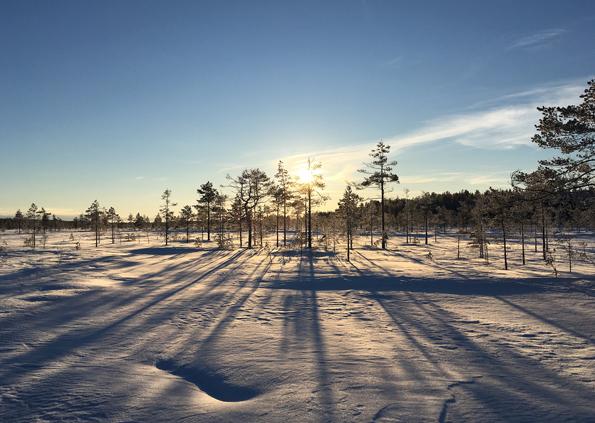 Talvinen suo, Ilomantsi. Kuva Suvi Haapalehto