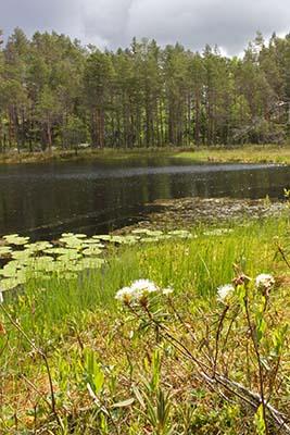 Lohikosken luonnonsuojelualue. Kuva Mari Laukkanen, Metsähallitus.