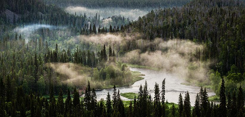 Mutkitteleva joki metsän keskellä. Joesta jousee vesihöyryä.