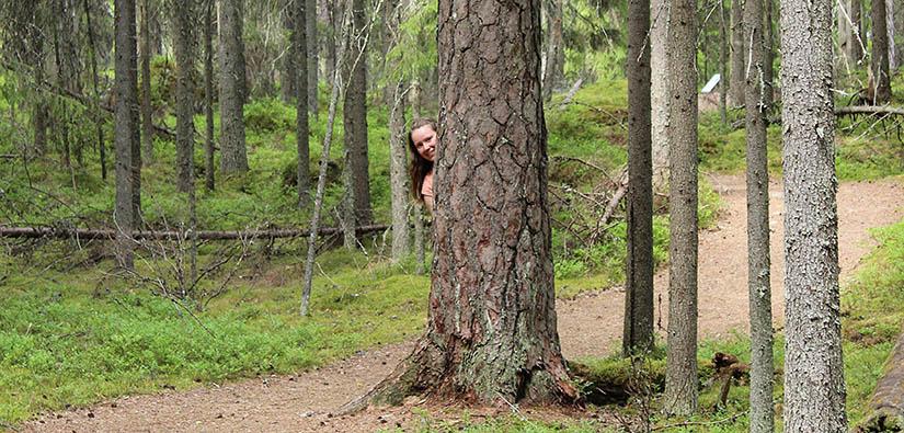 Seitsemisen kansallispuistossa. Kuva: Riikka Mansikkaviita