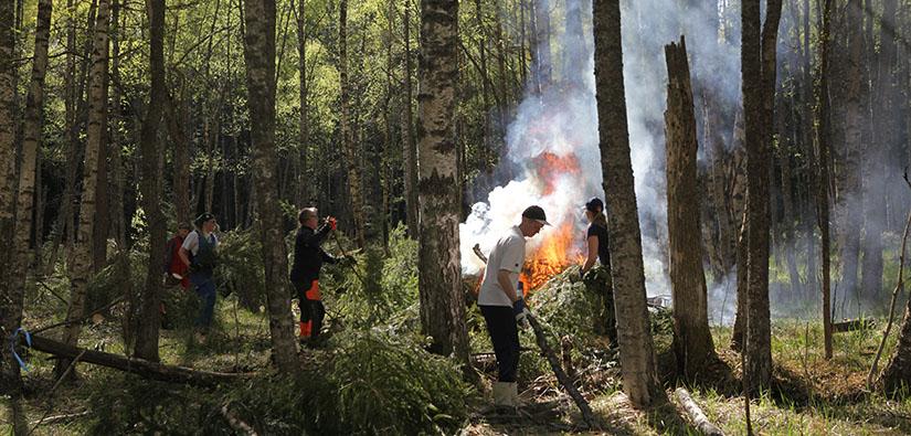 Vapaaehtoiset raivaavat vanhaa perinneympäristöä WWF:n ja Metsähallituksen talkooleirillä Loviisan Hudössä. Kuva: Päivi Leikas.