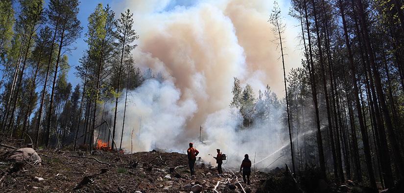Metsäluontoa autetaan polttamalla. Polton jälkeen on vuorossa sammutus. Kuva Teijon kansallispuistosta, Martina Reinikainen, Metsähallitus.