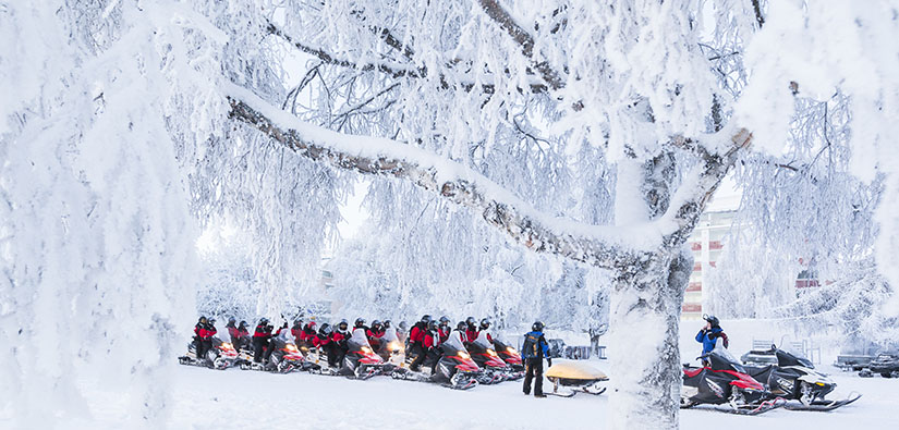 A snowmobile caravan has stopped next to a big tree in a snowy setting.