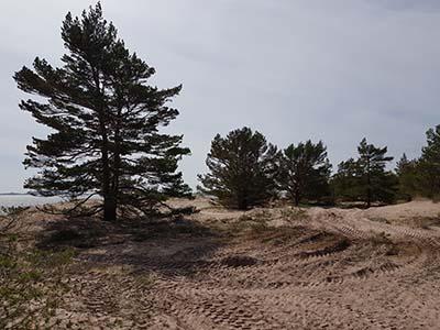 Hanko, Tulliniemenranta, pienempiä puita poistettu luonnonhoitotyöinä toukokuussa 2019. Kuva Esko Tainio, Metsähallitus.