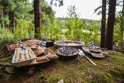 Mustikkapiirakoita tarjolla luonnon helmassa. Kuva: Joel Heino.