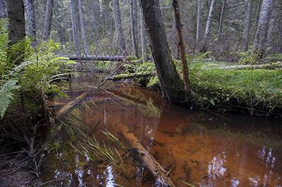 Pieni luonnontilainen joki. Kuva: Jari Ilmonen, Metsähallitus.