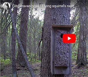 Liito-oravalle rakennettu pesäpönttö metsässä. Linkki Suomenluonnonsuojeluliiton sivuille.
