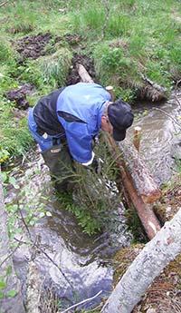 Mies asettelee puunrunkoja puroon.