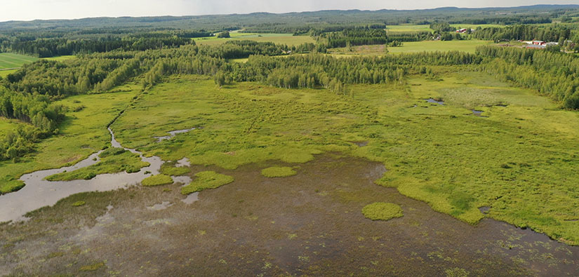 Päätyeenlahden kosteikko kuuluu Pohjois-Karjalaan perustettaviin suojelualueisiin. Kuva: Juha Siekkinen, Kosteikkomaailma.