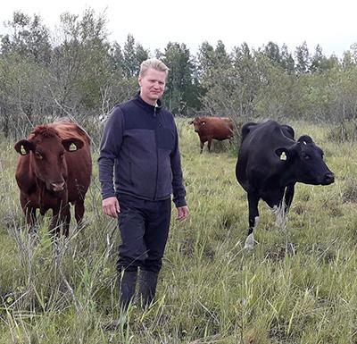 Mies seisoo luonnonlaitumella kolmen lehmän keskellä.