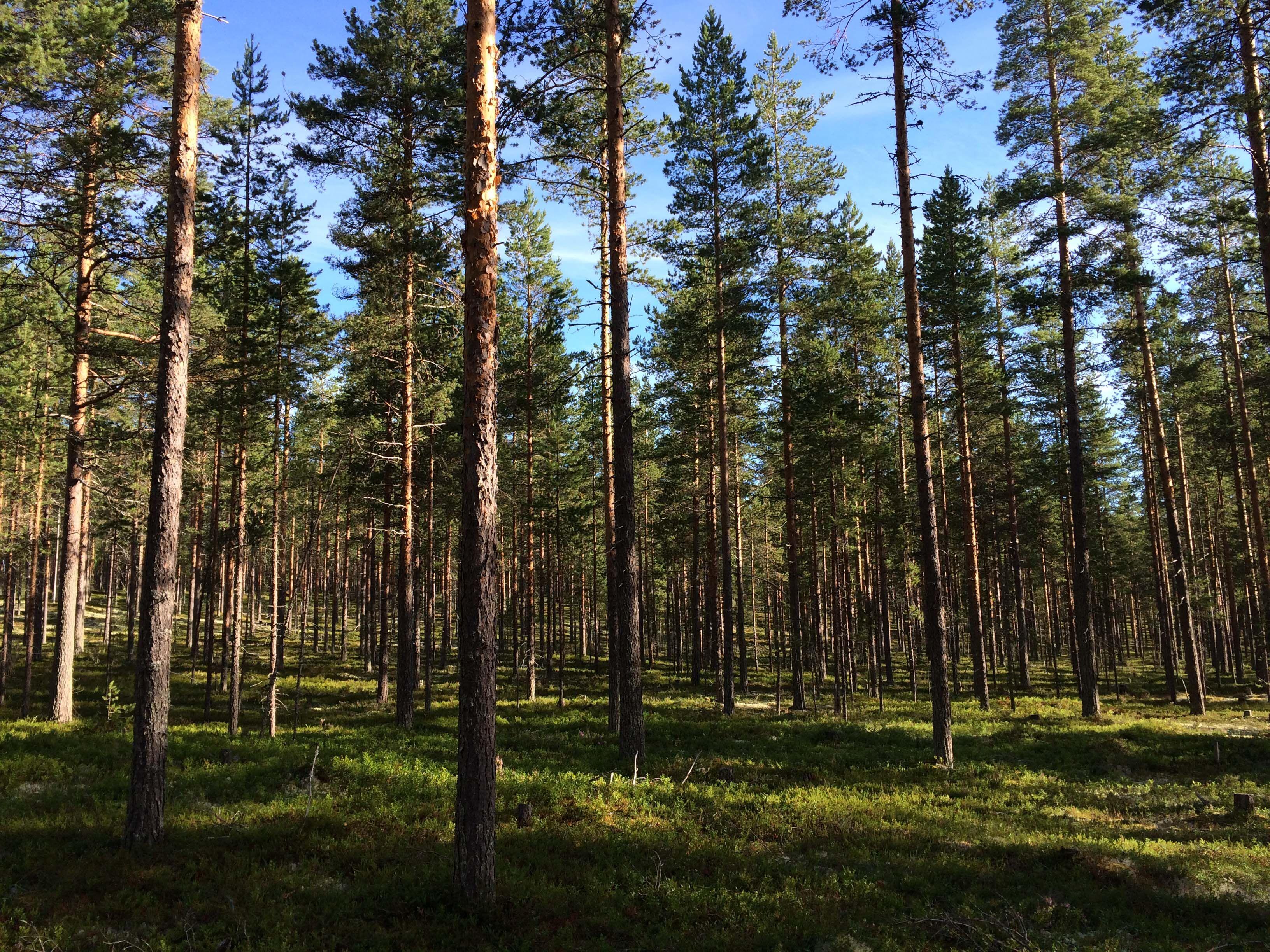 Näkymä Kuostonsaaresta, kuva Vesa Härkönen