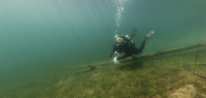 Sukeltaja sukeltaa aivan järjen pohjan lähellä. Pohjalla kasvaa vesikasveja.