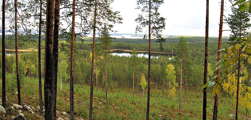 Ylä-Rauvanlampi Kemijärvellä. Kuva: Lea Pirttilä / Metsähallitus
