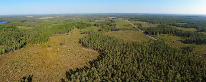 Flygbild av Luotonen i Viitasaari, där det finns många typer av avverkade områden i skogen.