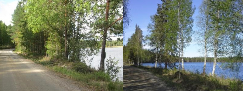 Two images showing how a lake landscape opens up when some of the trees blocking the view are removed.
