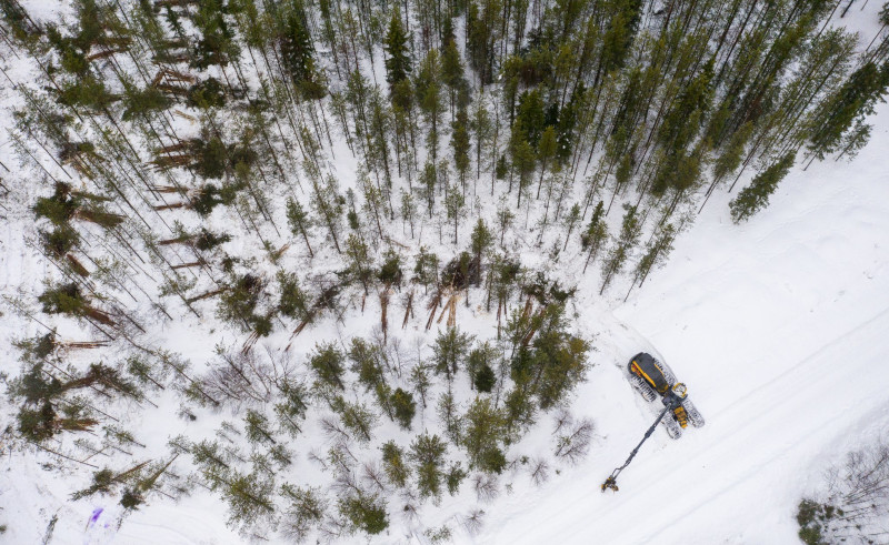 An aerial photograph of a forest machine who has left piles of pine trees behind.