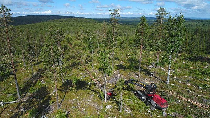Flygbild av en skogsmaskin som fäller tallar på en skogklädd sluttning.