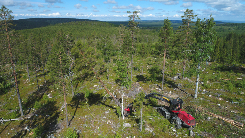 An aerial photograph of a forest machine cutting down a pine tree on a hill slope.