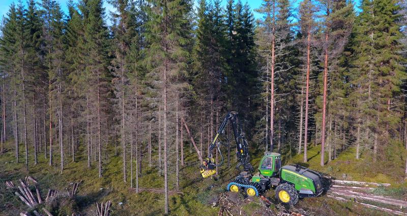 Flygbild av en skogsmaskin som fäller granar vid kanten av ett avverkat område.