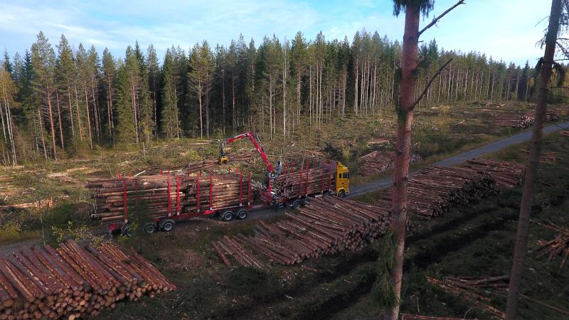 En virkestransportbil plockar upp virke vid en skogsväg.