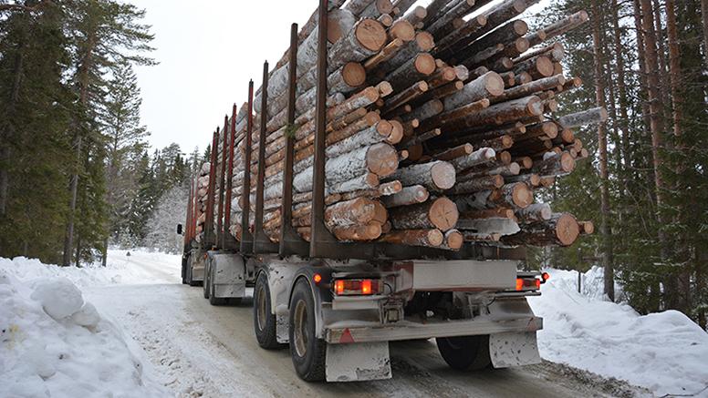En lastad timmerbil på en vintrig skogsväg.