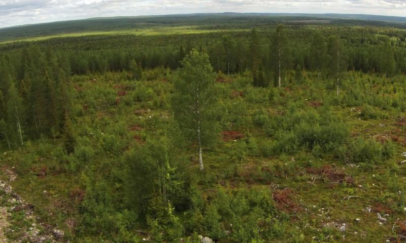 Flygbild av ett avverkat område där träd och undervegetation har lämnats kvar för djurens skull.