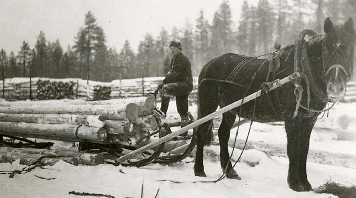 Mies on ladannut reen täyteen puita, joita hevonen on valmis vetämään.