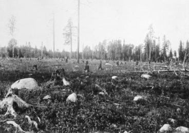 Metsänpohjaa kaskenpolton jälkeen: kiviä, hiiltyneitä kantoja ja muutamia pystyyn jääneitä puita.
