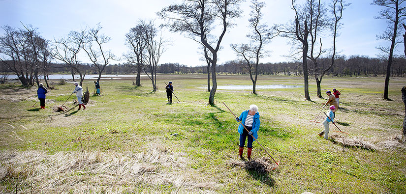 Kahdeksan talkoolaista haravoi rantaniittyä keväällä.