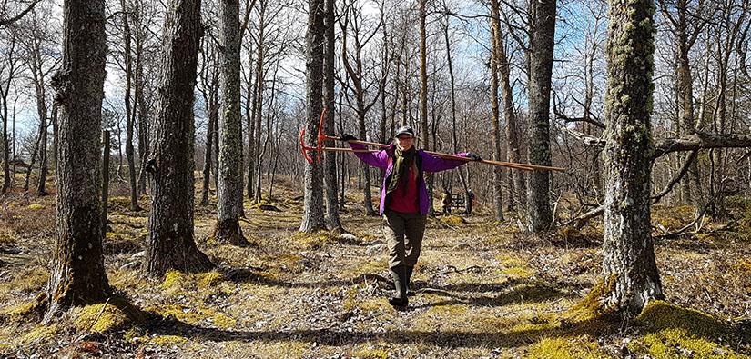 Nainen kävelee keväällä valoisassa vielä lehdettömässä jalopuulehdossa kaksi haravaa olkapäillään.