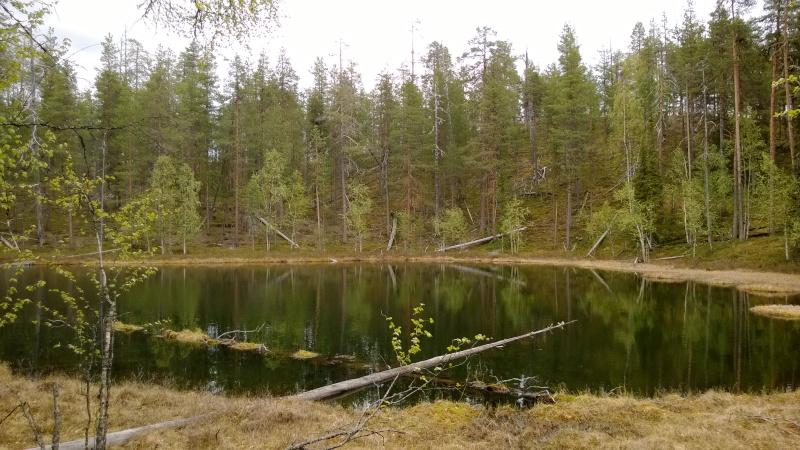 Puiden ympäröimä metsälampi, jonka ympärille on jätetty koskematon suojavyöhyke.