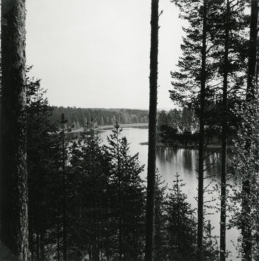 A lake landscape opening up behind young pine trees, a black and white image.