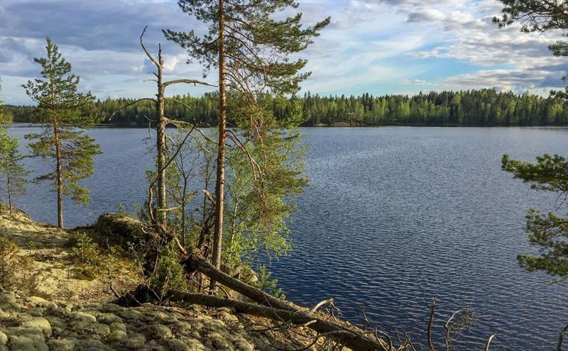 Kuva jäkälän peittämästä kalliosta, jolla on muutama mänty. Kalliolta avautuu näkymä järvelle.