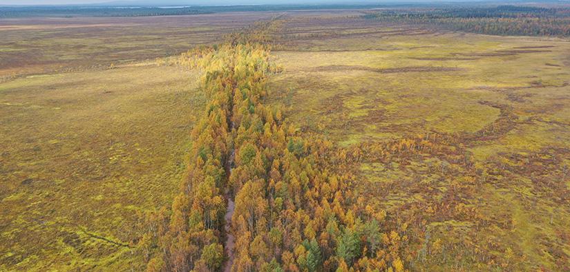 Laajan avosuon keskellä on oja, jonka molemmille puolille on kasvanut metsää.