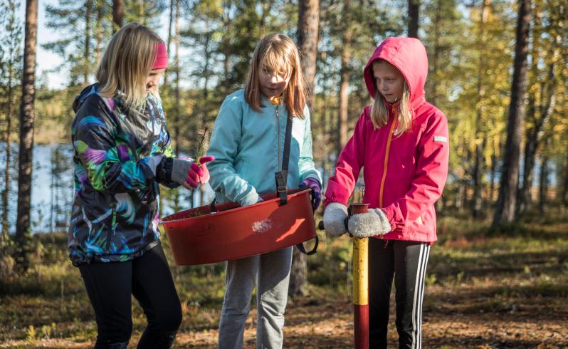 Kolme tyttöä taimenistutusvälineiden kanssa metsässä.