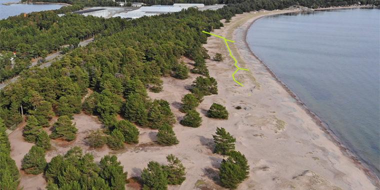 Hangon Tulliniemen merenranta, jossa hiekalla kasavaa matalia havupuita ja pensaita. Kuvaan piirretty linjaus tulevasta lankkupolusta.