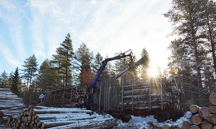 Puunkuljetus yúrakoitsijan auto lastaa puita