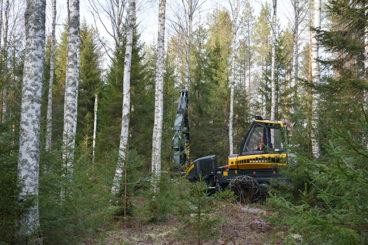 Skogsmaskin på kontinuitetsskogsbruks områden.
